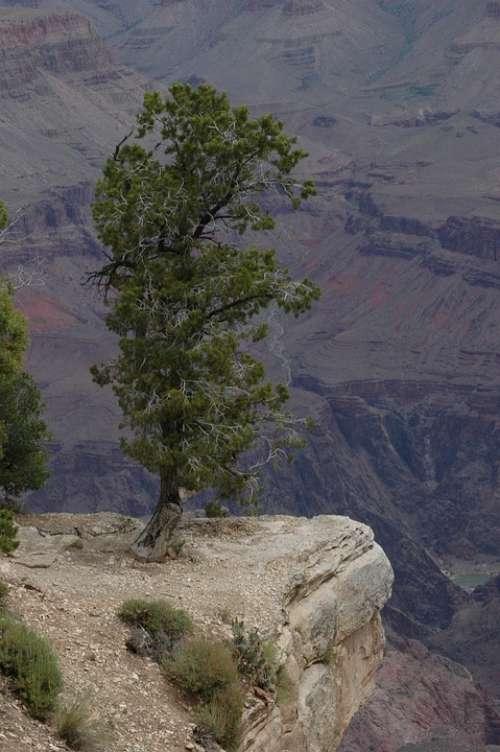 Lone Pine Grand Canyon Arizona Usa Park