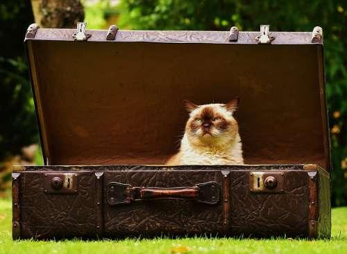 Luggage Antique Cat British Shorthair Funny