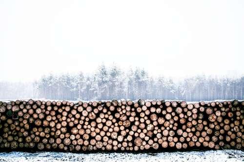 Lumber Winter Wood Trunk Log Timber Woodpile