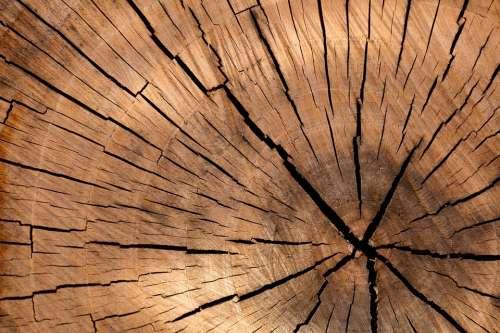 Lumber Wood Background Tree Log Tree Brown Cut