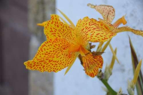 Lys Orange Flower Garden Nature Colorful Petals