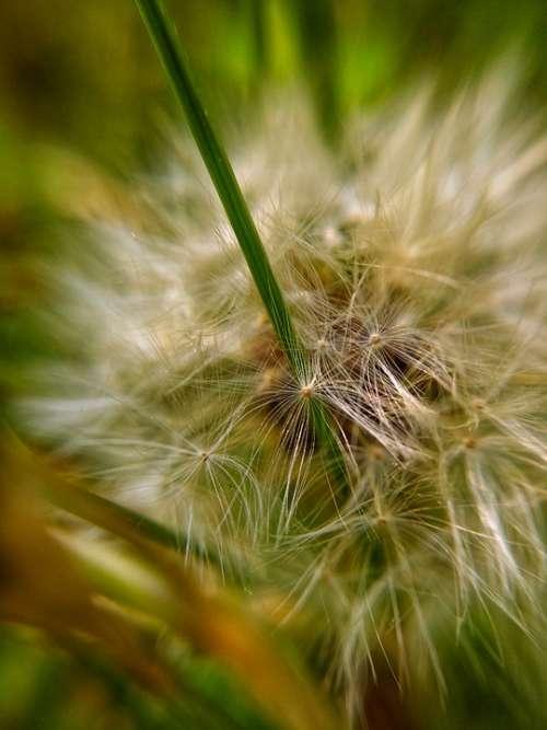 Macro Seeds Green