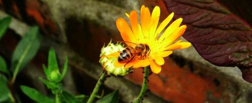 Macro Insect Garden Bee Colombia
