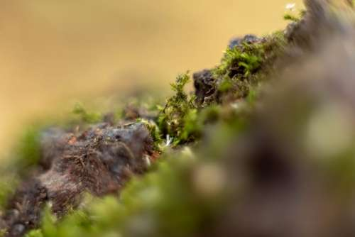 Macro Moss Close Up Nature Environment