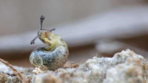 Macro Slug Animals Shell Closeup Creature Mucus