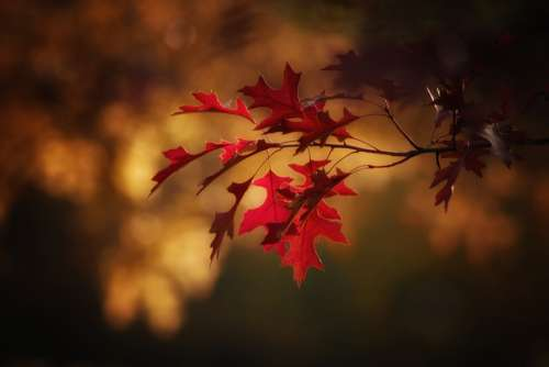 Maple Leaves Leaves Fall Color Autumn Colorful