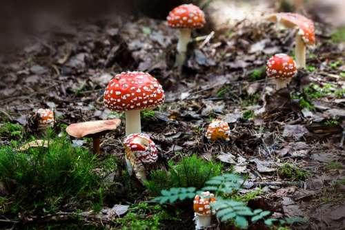 Matryoshka Amanita Muscaria Mushroom Hat Red
