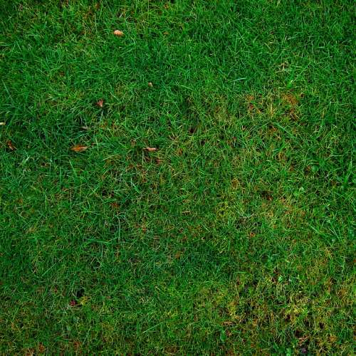 Meadow Grass Structure Texture Halme Green