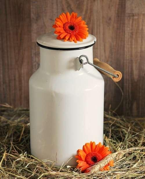 Milk Can Gerbera Flowers White Straw Orange