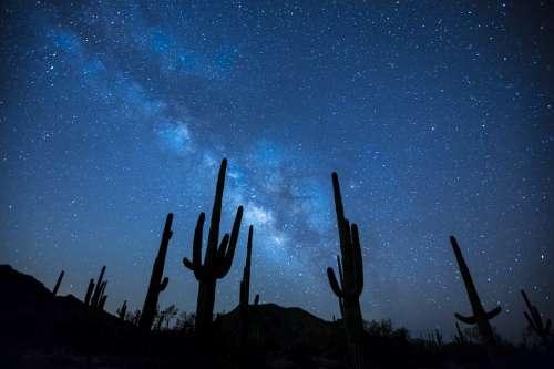 Milky Way Stars Night Sky Landscape Desert Cactus