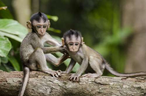 Monkeys Nature Animals Babies Apes Cute Small