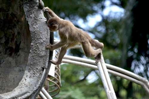 Mono Monito Nature Animal Jungle Zoo Guayaquil
