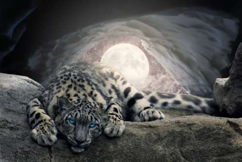 Moon Snow Cave Leopard Photoshop Animal
