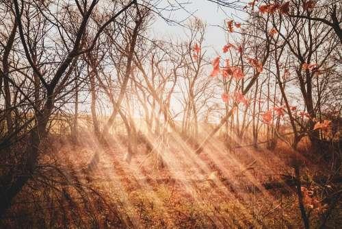 Moor Rays Light Sun Forest Landscape Sunbeam