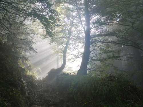 Morning Fog Sunbeam Mystical Mood Colourless