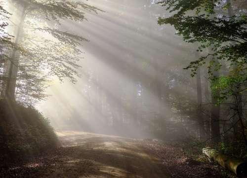 Morning Fog Sunbeam Forest Morgenstimmung