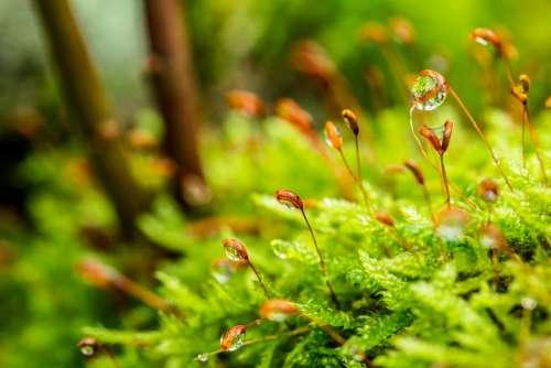 Moss Dewdrop Forest Floor Moist