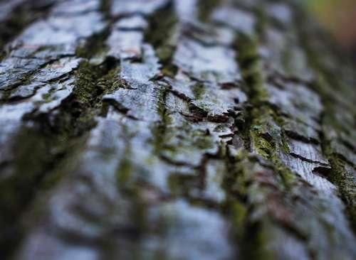 Moss Tree Plant Leaf Vegetation Texture Trunk