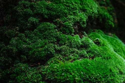 Moss Green Natural Stone Forest Vegetation