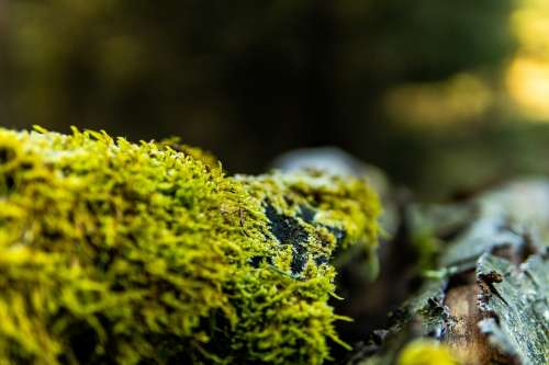 Moss Branch Forest Nature Aesthetic Green Tree