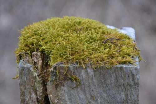 Moss Log Nature Wilderness Close Up Landscape