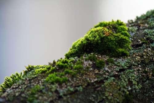 Moss Branch Green Bark Autumn