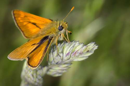 Moth Nature Insect Bug Macro Wild Plants Brown