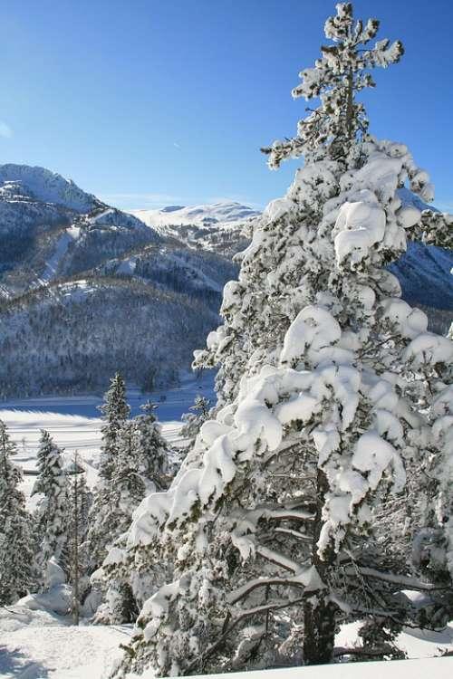 Mountain Snow Winter Montgenèvre Landscape Trees