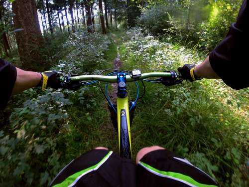 Mountain Bike Sport Forest Nature Forest Path