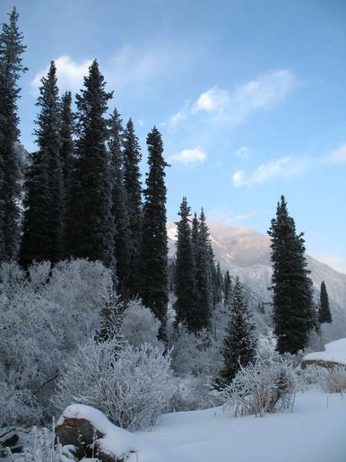 Mountain Forests Winter Tien-Shan Ala-Archa
