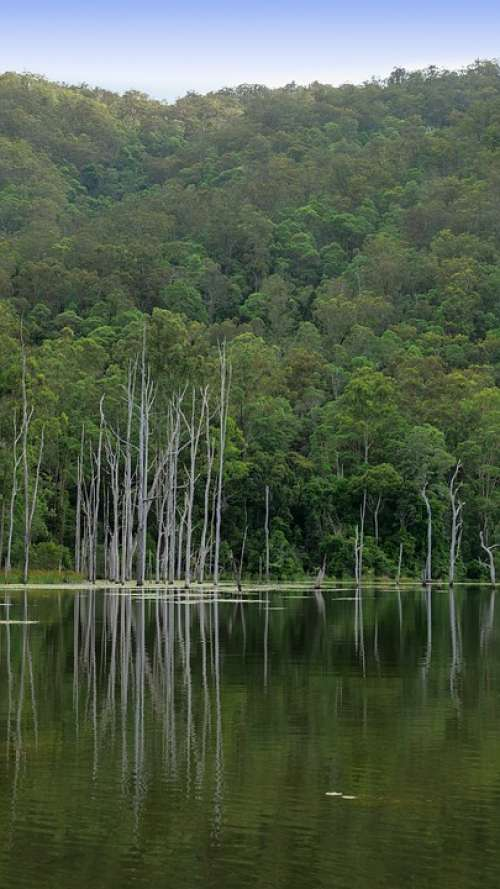 Mountain Lake Green Lily Pads Dead Trees Lake