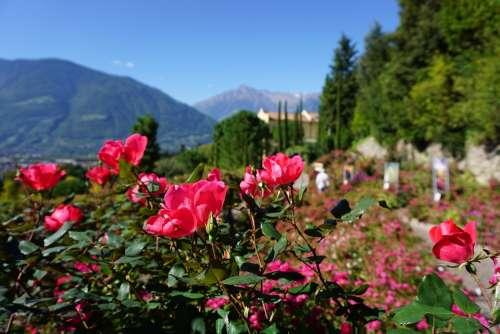 Mountains Castle Roses Meran Garden Nature
