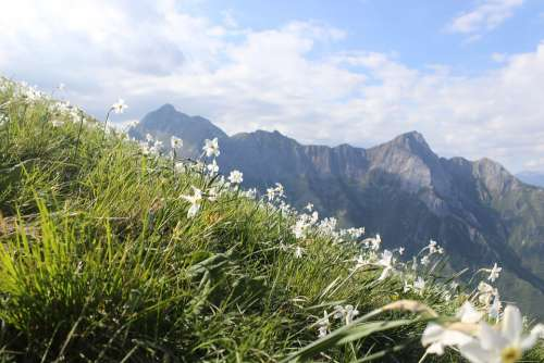 Mountains Flowers Panorama Landscape Sky Nature