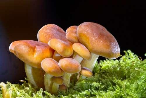 Mushroom Sponge Mini Mushroom Small Mushroom