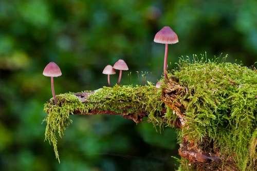 Mushroom Moss Mini Mushroom Sponge Autumn