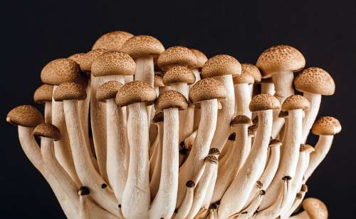 Mushroom Fungi Fungus Many Food Vegetarian