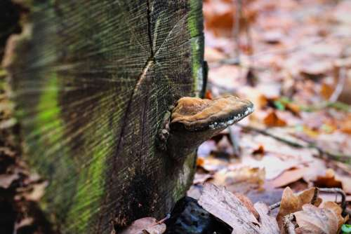 Mushroom Log Moss Leaves Forest Nature Botany