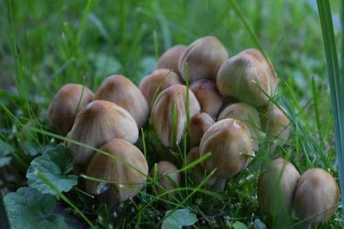 Mushroom Nature Autumn Close Up