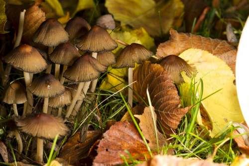 Mushrooms Nature Spores Forest Autumn Plant