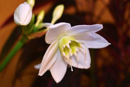 Naturaleza Flor Blanca Primavera Abierta Flores