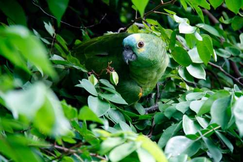 Nature Parrot Bird Animal Leaves Green Jungle