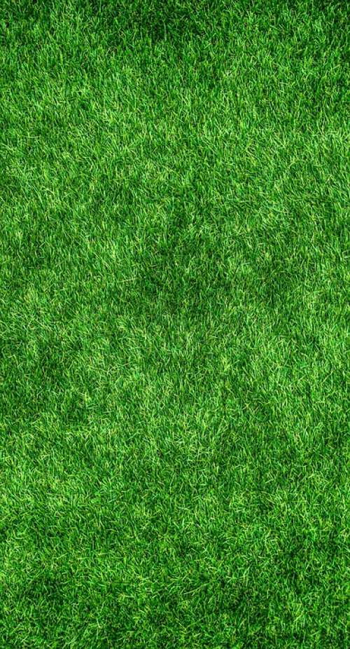 Nature Grass Green Lawn Plants Texture Background
