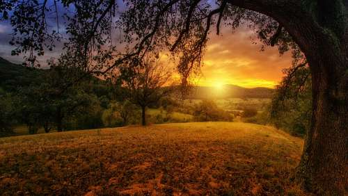 Nature Tree Dawn Landscape Panorama Sun Aesthetic