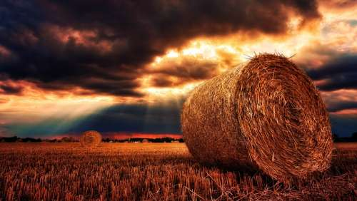 Nature Hay Bales Straw Straw Bales Cereals Harvest