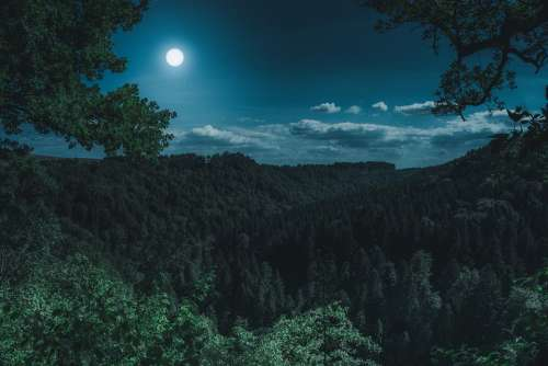 Nature Forest Landscape At Night Black Forest Dark