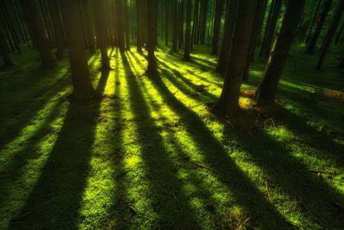 Nature Forest Moss Landscape Trees Rays Green