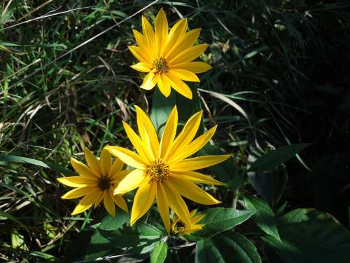 Nature Wild Flowers The Wayside Summer