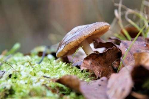 Nature Mushroom Forest Forest Floor Moss