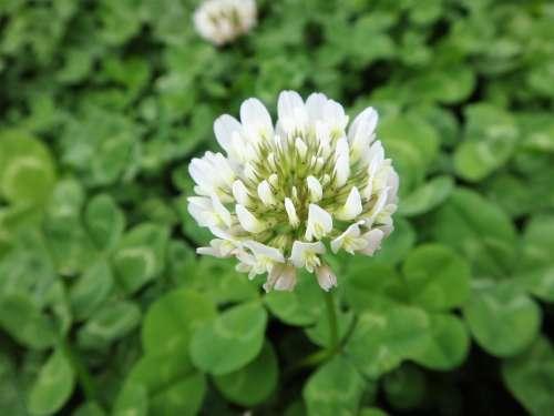 Nature White Flower White Plant Wild
