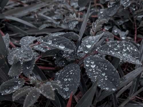 Nature Drops Of Rain Plants No Person